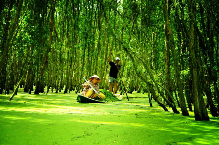 The view of Tra Su Cajuput Forest among the green nature - Photo: Internet