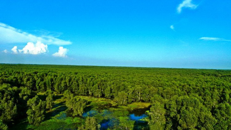 The vast Tra Su Cajuput Forest from above – Photo: Internet