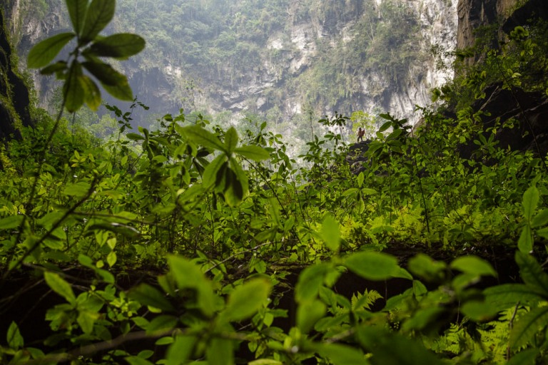 The flora in the cave is as abundant as the garden of Eden which exists in real life at Son Doong Cave