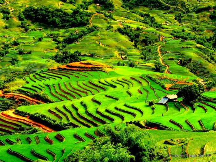 Terraced fields in Sapa always attract numerous tourists loving photography - Photo: Internet