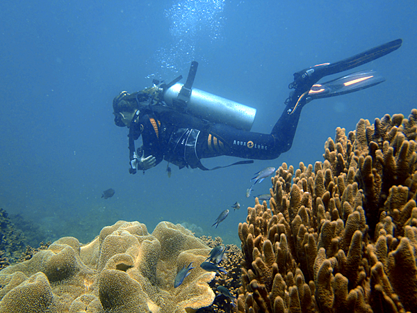 The Diving Base service attracts a large number of tourists - Photo: Furama resort Danang