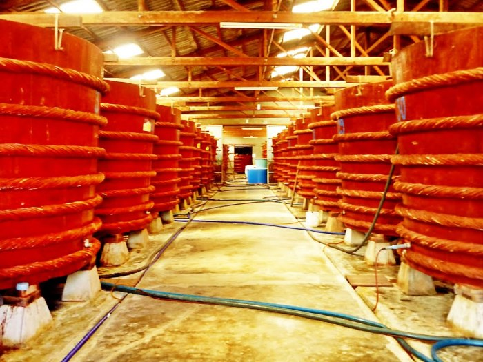 Currently, there are about 85 factories and they produce more than 12 million liters of fish sauce every year. This is a place worth visiting - Photo: Internet