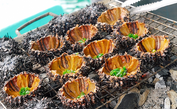 Sea urchin is considered as a healthy food for men - Photo: Internet