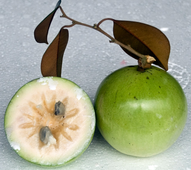 Star apple (or Vú Sữa) - Photo: Internet