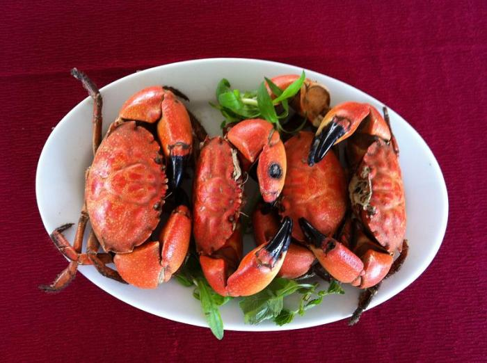 Stone crab has pincers which are bigger than the body - Photo: Internet