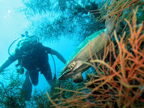A diverse marine is great for diving