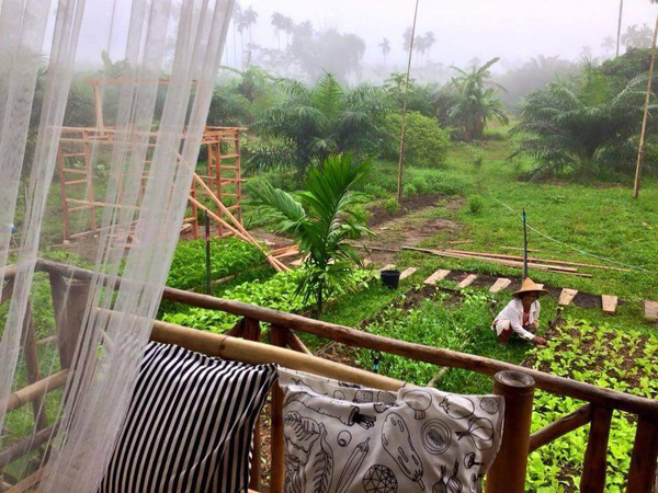 Fresh green farm covers the Baan Rai I Arun resort