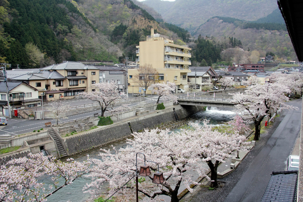 Yamagata is covered in cherry blossoms