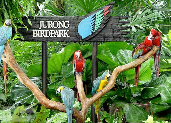 Lovely creatures in Jurong Bird Park