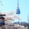 Top places to visit in Seoul during cherry blossom time